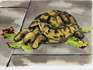 Turtle I